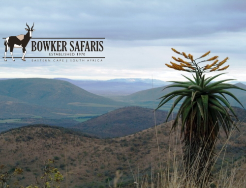Special Packages to Celebrate 50 years with Bowker Safaris in 2020!